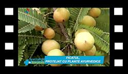 ficatul-protejat-cu-plante-ayurvedice